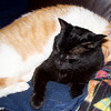 Chumley (orange) and Bosco (black)