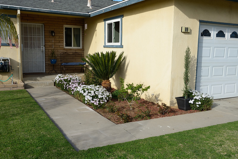 A special thanks to my parents for the generous mature Sego Palm that they donated for our front yard.