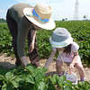 With Grandma Po Yee, picking strawberry on the day Hayden was born.