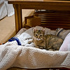 While I was in Yosemite, Liz took care of Tiger and made her a little bed. The bed was a big success, as Tiger continued to sleep in this bed for months afterward. And of course she keeps her toys in her bed. Nov 13, 2009.