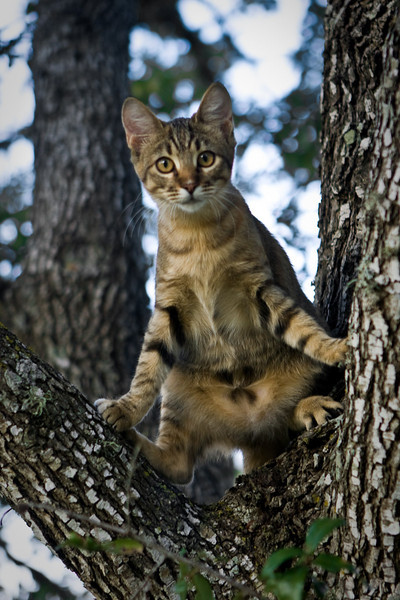 """One of Lilly's first days in a tree. She is still getting her """"tree legs""""."""