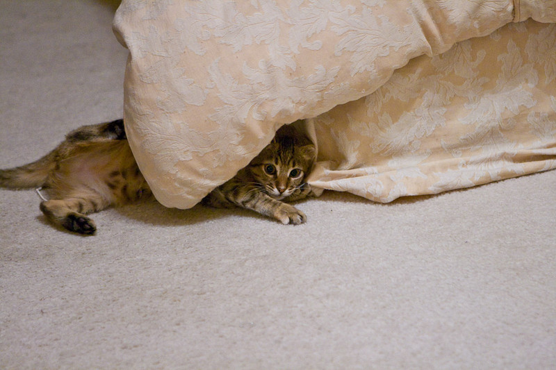 As a kitten she loved to get between the comforter and the box springs.