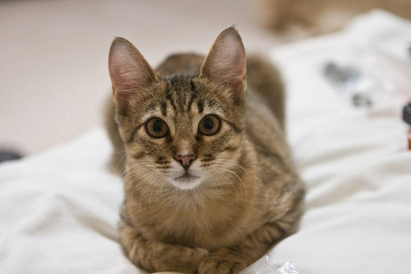 I took this series of photos the evening I was packing to go to Yosemite. Tiger Lilly was incredibly cute as she romped and played. Oct 27, 2009. The vet said she was about 3 months old.