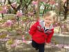 Enjoying the cherry blossoms at the Osaka Mint, with Jennifer Meyers Sullivan   April 2013