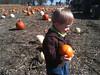 At Kregel's Pumpkin Patch, Oct  2012