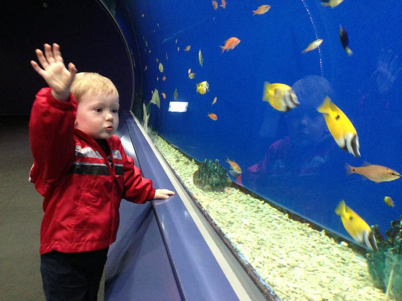 Aquarium - Osaka, Japan   Samuel at Osaka Aquarium, April 2013