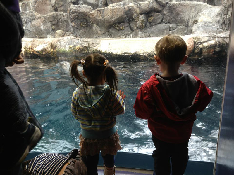 He made quick friends with the Japanese preschoolers touring the aquarium today