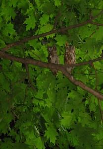 close-up of owls