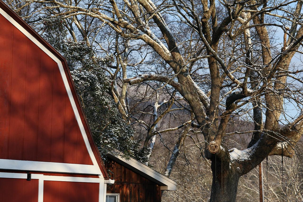 The Big  Oak tree this past winter 2010-2011