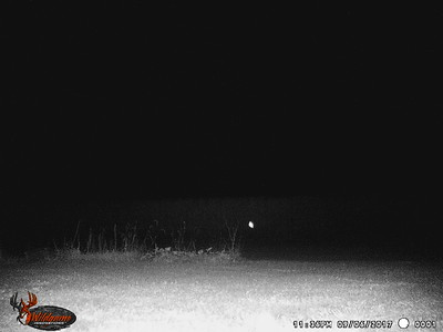 Trail Cam Images and Videos 2017