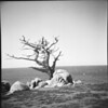 Carmel Cypress, 17 Mile Drive<br /> May 1960