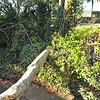 Tree Down 309RR 02-07-20