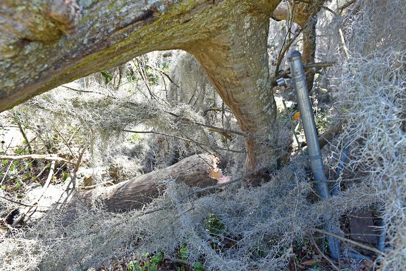 Tree clobbers Louisa's House