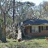 Tree-f6724