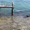 Manatee and her baby swimming under the dock at the house