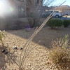 Some of the interesting desert plants in the yard, including ocotillo.