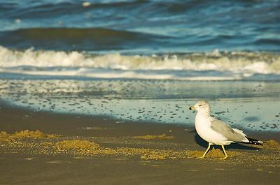 Beach-012