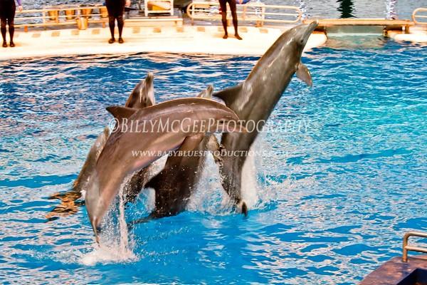 Baltimore Aquarium Inner Harbor - 27 Feb 10