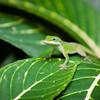 Hello gecko!