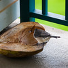 We left half of a coconut out on the lanai and the birds loved it.