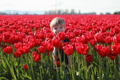 Tulip Festival 2011