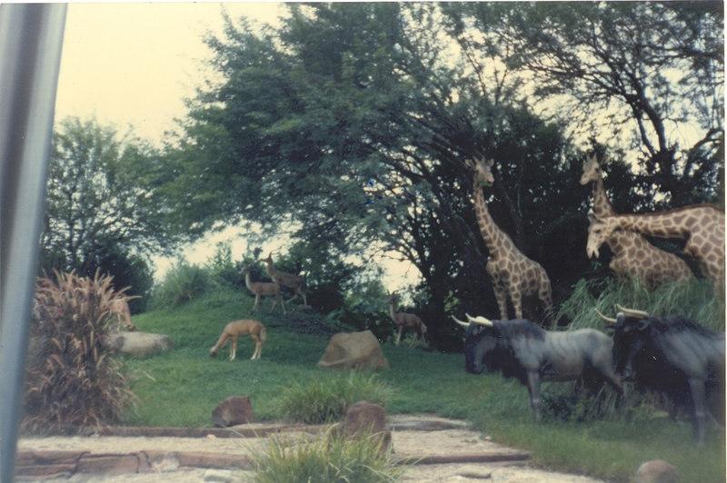 us-visit-florida-disney-zoo1