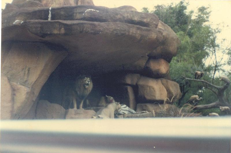 us-visit-florida-disney-zoo2