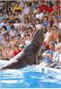 us-visit-florida-seaworld-sealion