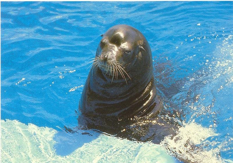 us-visit-florida-seaworld-sealion2