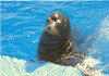 us-visit-florida-seaworld-sealion2