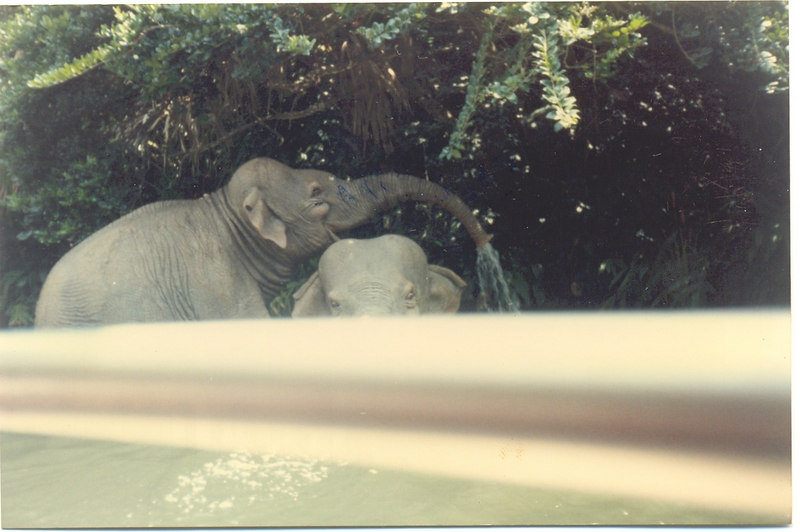 us-visit-florida-disney-zoo