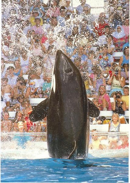 us-visit-florida-seaworld-shamu-2