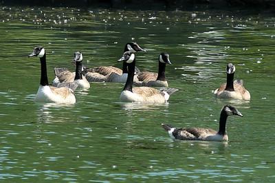 15 07 10 Cayuga Lake Tubing-8