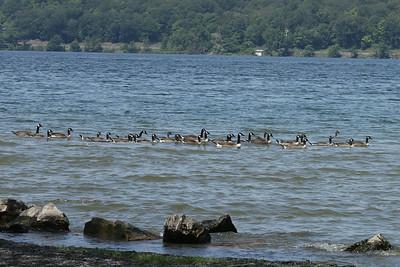 15 07 10 Cayuga Lake Tubing-4