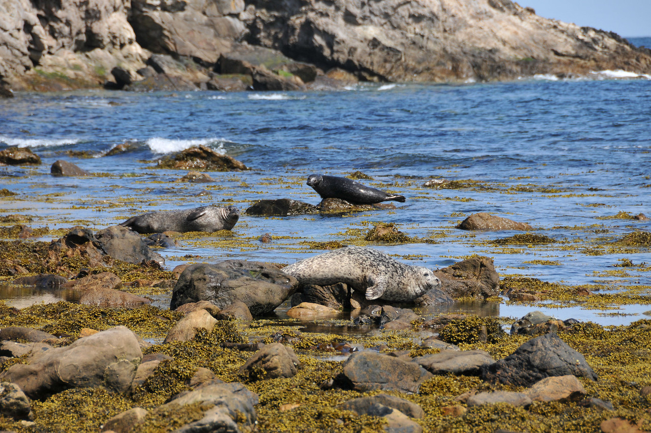 More seals (same ones, really).