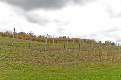 TC wine tour-7891