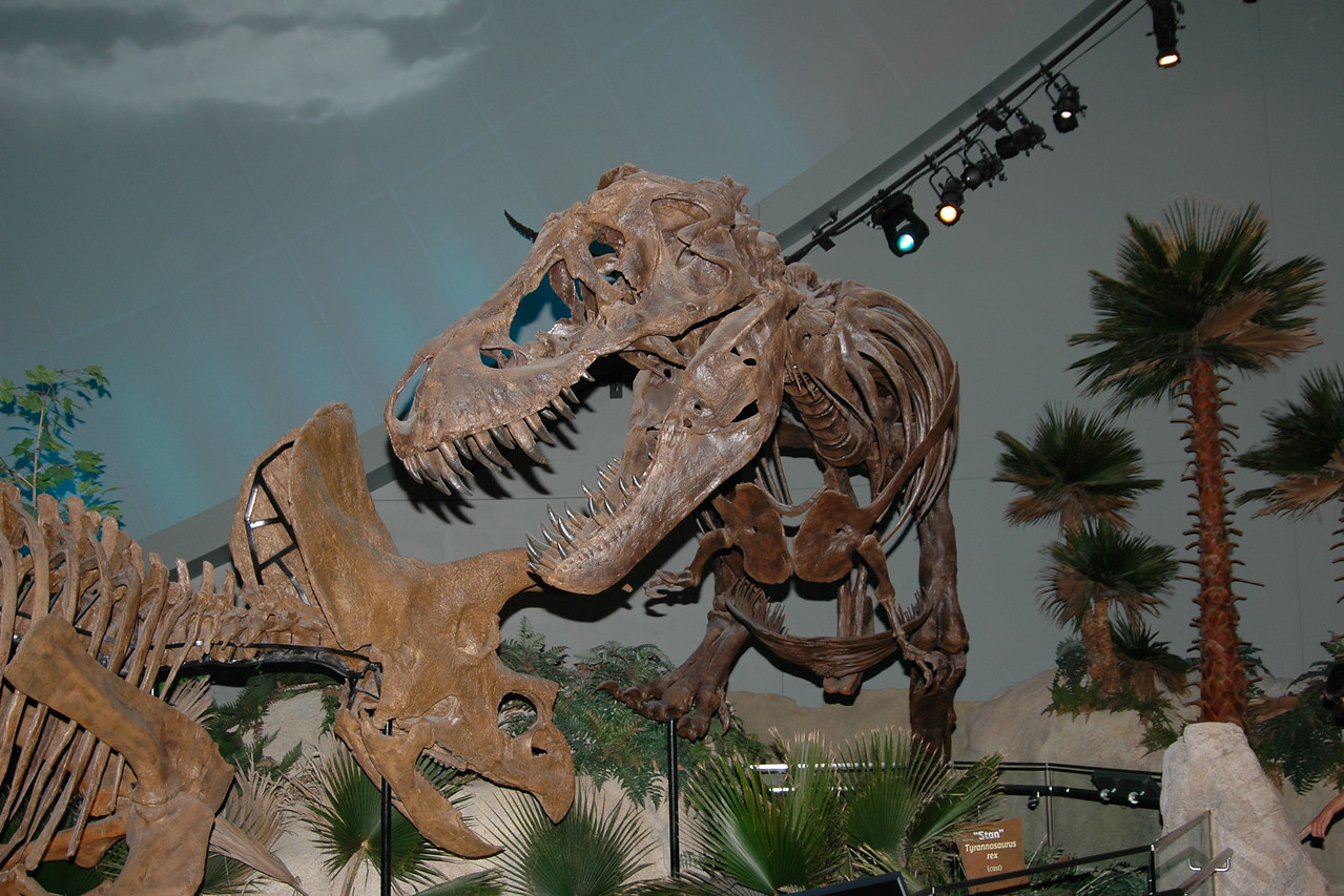 T. Rex meets triceratops. Both look a bit underfed.