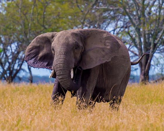 Serengeti Photos