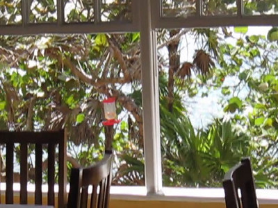 Paya Bay Resort - Roatan, Honduras.  Hummingbirds.  We've never seen so many of them.