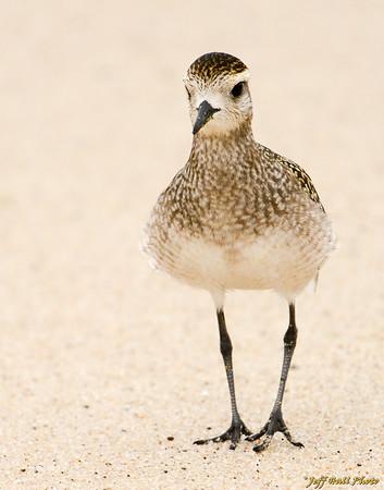 Jeff's Favorite Bird Pix
