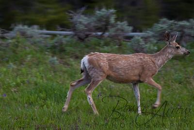 Big Horn National Forrest 20110705-0080