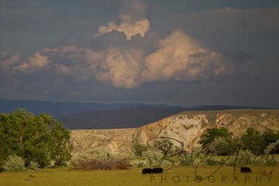 Big Horn National Forrest 20110705-0020
