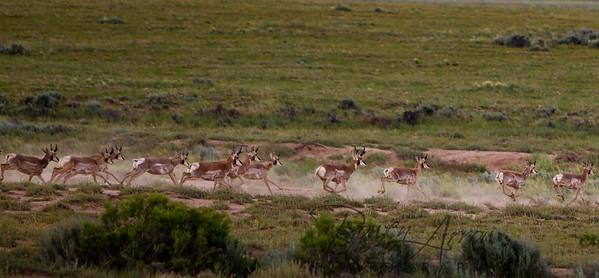 Big Horn National Forrest 20110705-0009