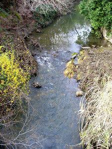 stream in Napa