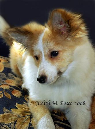 Vanille, The Wonder Puppy!