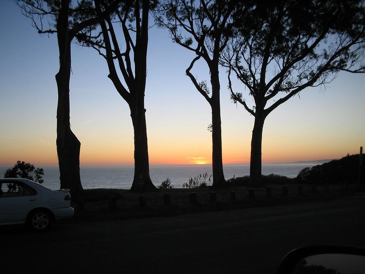 La Selva Trees