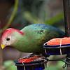 Another rare bird, James L. Popp Nature Conservancy