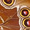 Butterfly wing, James L. Popp Nature Conservancy