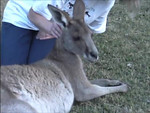 Tie me kangaroo down