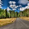 Aspen Grove-Colorado National Park, Co.